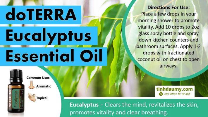 Tinh dầu khuynh diệp Bạch đàn doterra Eucalyptus Radiata công dụng và trị liệu - Tinhdaumy.com