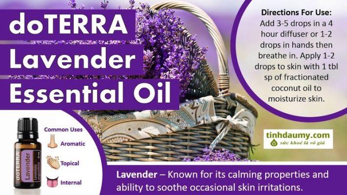 Tinh dầu Oải hương doterra Lavender với vô số lợi ích và công dụng hàng ngày - Tinhdaumy.com