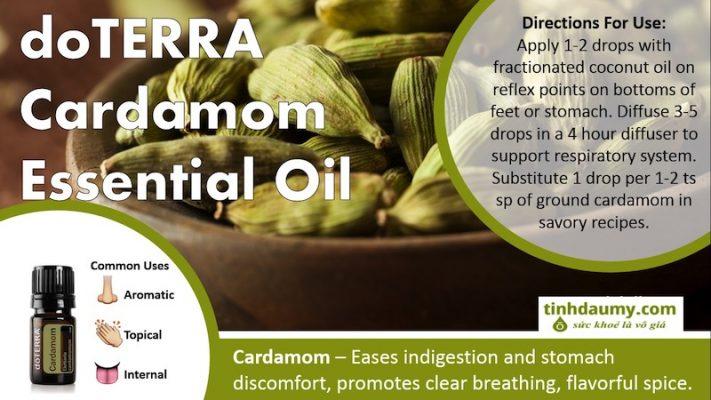Tinh dầu Bạch đậu khấu doterra Cardamom - Tinhdaumy.com