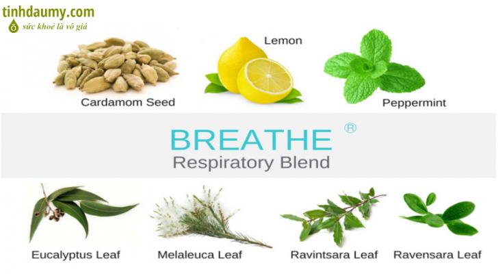 Các nguyên liệu trong hỗn hợp tinh dầu hô hấp Breathe