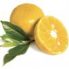 tinh-dau-quyt-vang-doterra-yellow-mandarin-tinhdaumy.com
